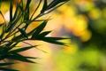 Картинка листья, ветки, macro, bokeh, bamboo
