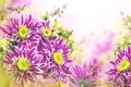 Картинка листья, цветы, хризантемы