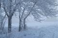 Картинка зима, трава, снег, деревья