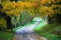 Картинка дорога, деревья, пейзаж