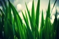 Картинка трава, листья, зеленый, размытие, размытость