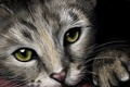 Картинка котенок, зеленые глаза, живопись, ушки, лапки, мордочка, взгляд