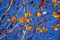 Картинка небо, листья, солнечный, филиалы