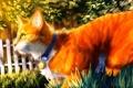 Картинка синий, трава, ошейник, забор, зеленые глаза, живопись, рыжий кот