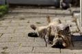 Картинка кошка, кот, наслаждение, лежит