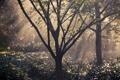 Картинка свет, деревья, природа, дождь