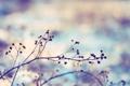 Картинка цвета, макро, фото, фон, обои, растение, ветка