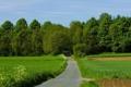 Картинка дорога, зелень, поле, лес, деревья