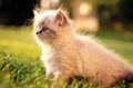 Картинка кот, котенок, трава, белый, cat, макро, кошка
