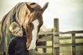 Картинка настроение, конь, малчик
