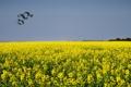 Картинка небо, цветы, птицы, Обои лето