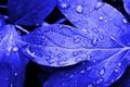 Картинка листья, капли, обработка, яркие