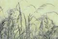 Картинка колоски, фон, трава, растения