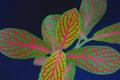 Картинка листья, линии, растение, экзотика