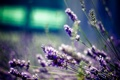 Картинка макро, цветы, природа, фото, размытость, боке