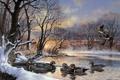 Картинка закат, рассвет, полынья, Harold Roe, стая уток, Winter Woodies, wood duck