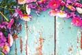 Картинка цветы, ромашки, полевые цветы, фиалки, маргаритки