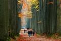 Картинка осень, лес, листья, деревья, парк, люди, аллея