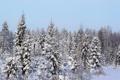 Картинка зима, лес, снег, елки