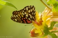 Картинка бабочка, макро, цветок