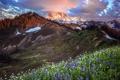 Картинка небо, пейзаж, цветы, горы