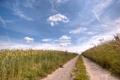 Картинка поле, урожай, небо, дорога