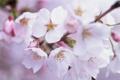 Картинка дерево, красота, весна, цветение