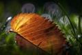 Картинка трава, макро, листик, leaves