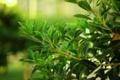 Картинка природа, листья, зелень