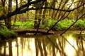 Картинка вода, деревья, природа, река, красота, леса, реки