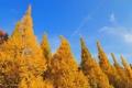 Картинка осень, лес, небо, облака, деревья, пейзаж, настроение
