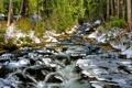 Картинка лес, снег, деревья, река, ручей, камни, поток