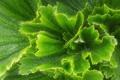 Картинка листья, растение, зелень