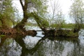 Картинка небо, деревья, река, весна