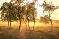 Картинка деревья, туман, утро