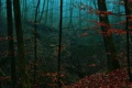 Картинка листья, лес, осень, овраг, деревья, туман, вечер