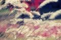 Картинка цвета, макро, природа, фото, обои, растения, light