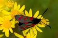 Картинка макро, цветы, бабочка, растение, крылья