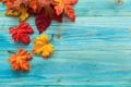 Картинка листья, осень, дерево, клён