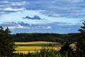Картинка поле, лес, небо