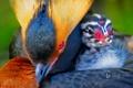 Картинка птица, краски, перья, птенец