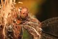 Картинка макро, стрекоза, насекомое