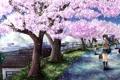 Картинка дорога, девушка, деревья, цветы, город, забор, сакура