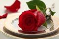 Картинка капли, rose, table, flower, drops, luxury, сервис