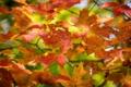 Картинка осень, листья, цвета, макро, ветка