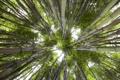 Картинка зелень, небо, природа, бамбук, вид снизу