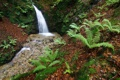 Картинка лес, деревья, природа, река, ручей, камни, водопад