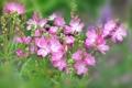 Картинка лето, цветы, лепестки, луг
