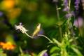 Картинка зелень, листья, цветы, природа, птица, колибри