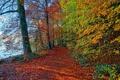 Картинка листья, лес, дорожка, осень